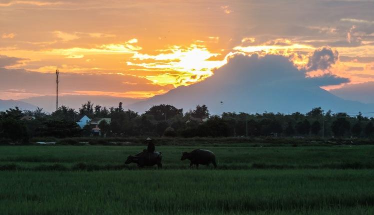 Man and buffalo at sunset_edited