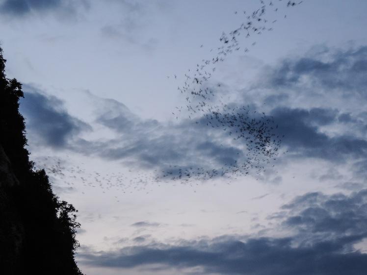 Bats in Battambang.jpg