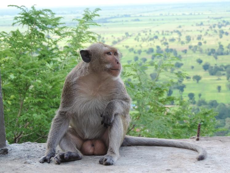 Monkeys in Battambang.jpg